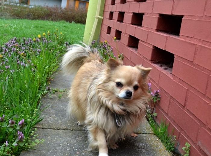 dfa8c52b078 Svoboda zvířat spouští novou petici proti testování na zvířatech – podepsat  ji mohou i psi a kočky